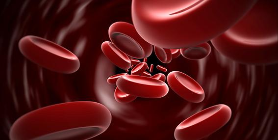 Hematíes en flujo sanguíneo